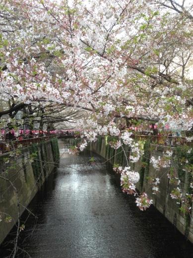 Tokyo_Meguro_River