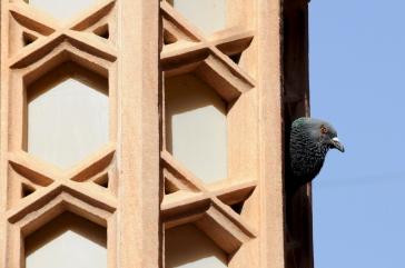 Jodhpur - the current tenants!