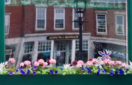 Belfast_Reflection_flowers